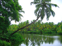 Village Intereous of Alleppey